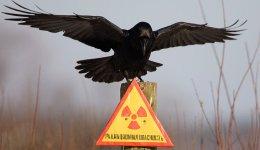 Մտադիր են հրաժարվել ատոմային էներգիայի «բարիքներից»