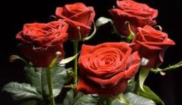 Վարդեր բուսաբանական այգուն