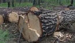 Յուրացումներ Լալվարի անտառտնտեսությունում