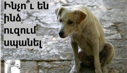 Երևանի քաղաքապետարանը գումարներ է դիզում թափառող շների վրա