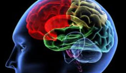 Մտավոր ունակությունները անկում են ապրում 45 — 49 տարեկանում