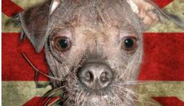 Աշխարհի ամենատգեղ շուն է ճանաչվել Մագլին