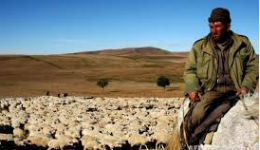 Ավարայրի փղերից մինչև Սյունիքի ոչխարները (ֆեյսբուք)