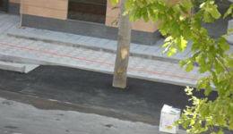 Սարյան փողոցում հերմետիկ ասֆալտապատել են ծառերի արմատները