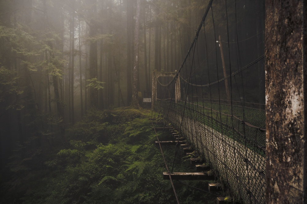 8827660-R3L8T8D-1000-forest-bridge-at-the-alishan-mountain-taiwan-by-kent-2012