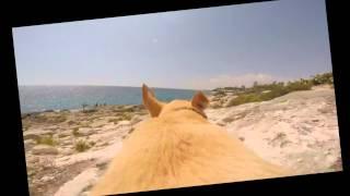 Այս շունը շատ է սիրում ծովը