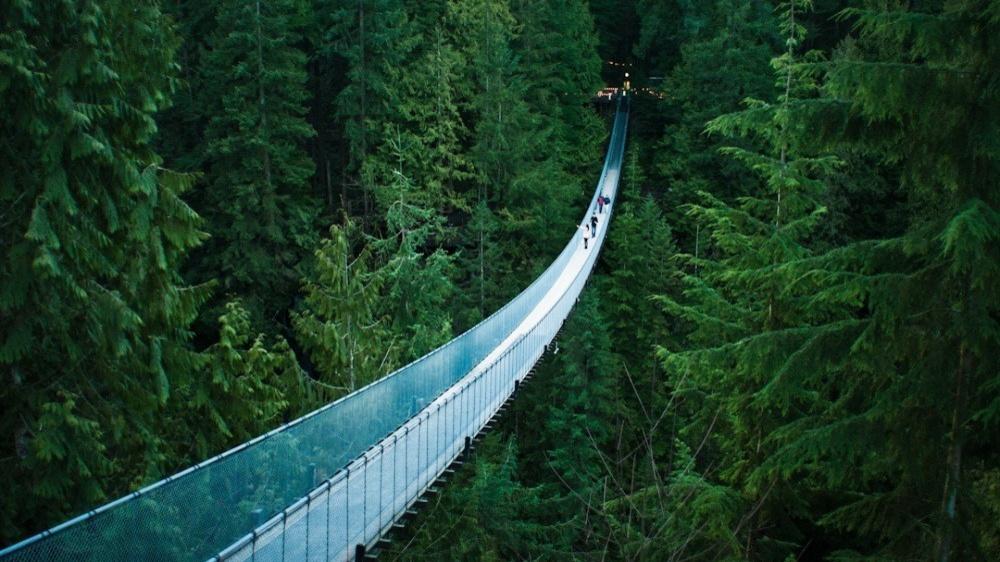 8828260-R3L8T8D-1000-nature_trees_forests_bridges_rope_bridge_pine_1920x1080_58605