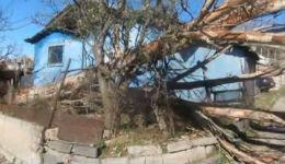 Վանաձորում ուժեղ քամին ծառեր է արմատախիլ արել   (տեսանյութ)