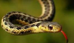 Աղդամի ռեգիոնում օձերը հարձակվում են մարդկանց վրա․ ադրբեջանցիք մեղադրում են հայերին