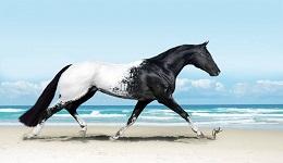 Մոլորակի ամենագեղեցիկ 10 ձիերը (լուսանկարներ)